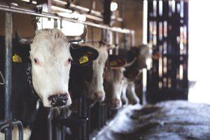 California Milk Handler Surety Bond