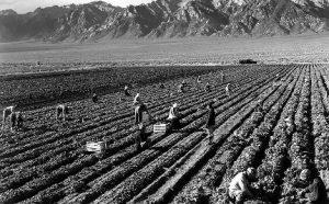 California Farm Labor Contractor Surety Bond