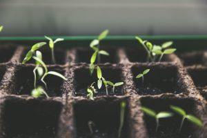 Florida Fertilizer Dealer Surety Bond