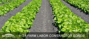 H-2A Farm Labor Contractor Bond
