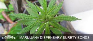California Cannabis Bonds